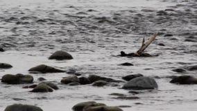 Rivierwater die over rotsen lopen stock videobeelden