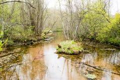 Rivière avec des ressorts Image stock