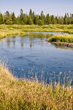 Rivière de Madison près de Yellowstone occidental, Etats-Unis Photographie stock