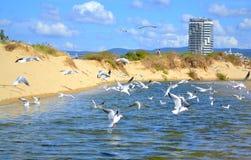 Rivière de plage d'été Images libres de droits