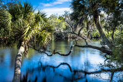 Rivière la Floride de Myakka Images libres de droits