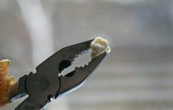 rivit sönder ut en rutten tand i rostig plattång arkivbild