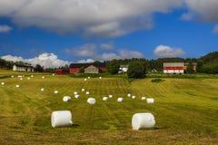 Rivoltando il fieno nel campo Paesaggio rurale pittoresco Immagine Stock Libera da Diritti