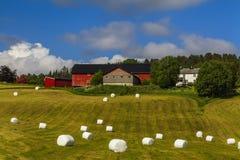 Rivoltando il fieno nel campo Paesaggio rurale pittoresco Immagini Stock Libere da Diritti
