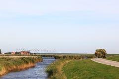 Rivolti il fieno il trasporto del trattore all'isola rurale di Ameland, Olanda Immagine Stock Libera da Diritti