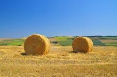 Rivolti il fieno la paglia sul campo rurale con chiaro cielo blu Fotografia Stock