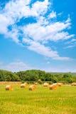 Rivolti il fieno rotondo le piante del cereale del greenfield della balla nel giorno soleggiato Fotografia Stock Libera da Diritti