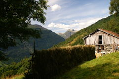Rivolti il fieno su una cremagliera nel vicino di Geiranger, Norvegia Immagini Stock Libere da Diritti