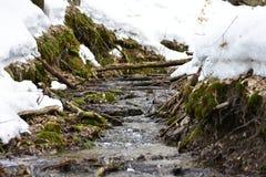 rivulet в лесе Стоковая Фотография RF