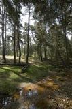 Rivulet в лесе Espineda стоковая фотография rf
