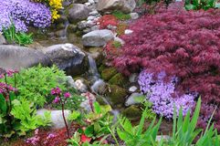 Rivulet between different plants Stock Photography