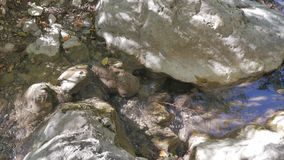 rivulet flowing over the rocks stock video