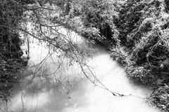 Rivulet in the jungle black and white background Stock Images