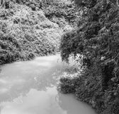 Rivulet in the jungle black and white background Royalty Free Stock Photo