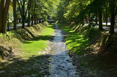 Rivulet and Trees Royalty Free Stock Image