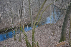 Rivulet in a wood. A rivulet of water in a wood Stock Photos