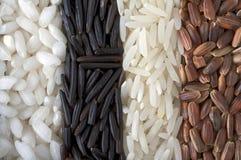 riz Photographie stock libre de droits