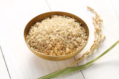 Riz brun avec l'oreille du riz image libre de droits