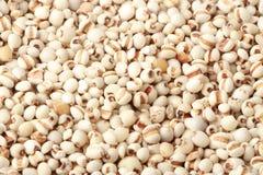 Riz brun organique images stock