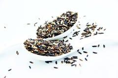 Riz brun organique dans des cuillères Images stock