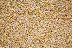 Riz brun, texture moyenne Image libre de droits