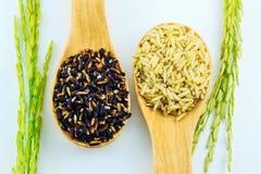 Riz collant noir, riz brun dans la cuillère en bois et riz non-décortiqué Photo stock