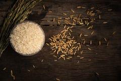 Riz dans la tasse avec la transitoire de paddy et de riz photos stock