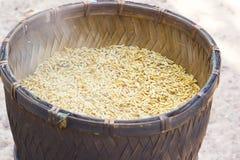 Riz de BA de GA ou riz brun germé Images stock