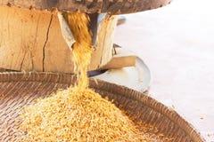 Riz de BA de GA ou riz brun germé Photographie stock libre de droits
