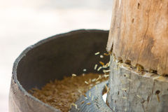Riz de BA de GA ou riz brun germé Photographie stock