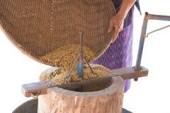 Riz de BA de GA ou riz brun germé Image libre de droits