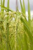 riz de centrale Photo stock