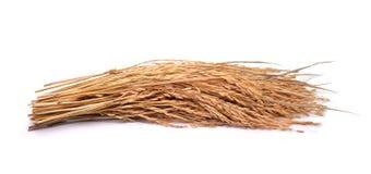 Riz de jasmin de paddy sur le fond blanc Image stock