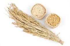 Riz de jasmin jaune (riz brun) Photo libre de droits