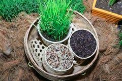 Riz de jasmin, riz brun de riz brut Image libre de droits