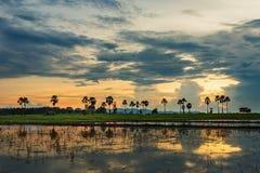 Riz de la Thaïlande de paysage de rizière le beau met en place la tache floue de coucher du soleil de lever de soleil photos stock