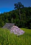 riz de zone Photos libres de droits