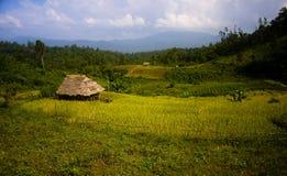 riz de zone Images libres de droits
