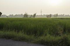 Riz et champs photos stock