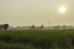 Riz et champs Photographie stock libre de droits