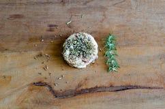 Riz et herbes Image libre de droits