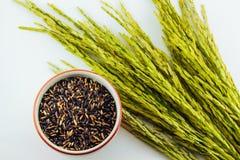 Riz noir en tasse et riz non-décortiqué Photographie stock