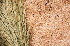 Riz non-décortiqué, riz brun, riz blanc Image stock
