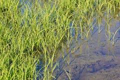 Riz Paddy Field photos stock