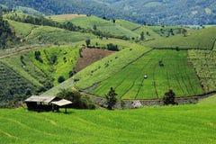 Riz Paddy Fields en Thaïlande Photo stock