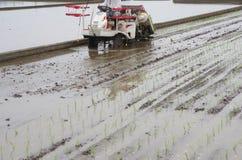 Riz plantant par la machine Image stock