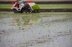Riz plantant par la machine Photos libres de droits
