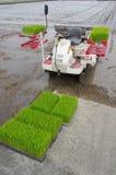 Riz plantant par la machine Images libres de droits