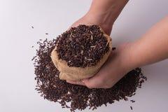 riz riceberry dans des mains se tenant, vue supérieure Image libre de droits