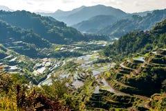 Riz-terrasses de Banaue Image stock